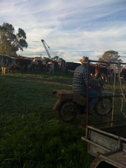 David at Farm