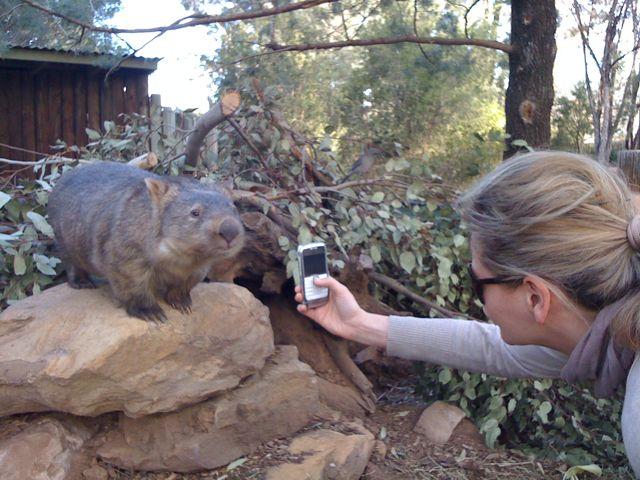 Elena & Wombat